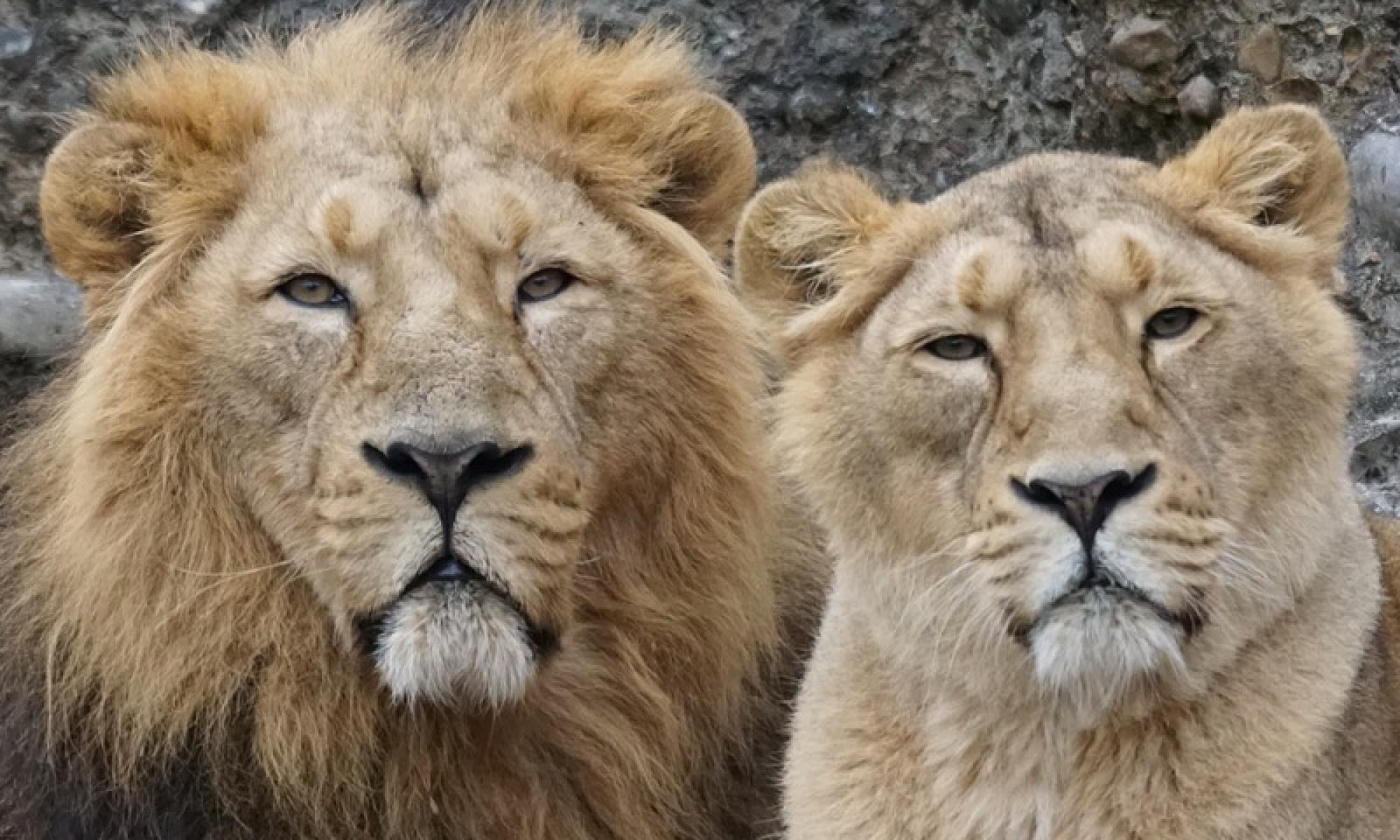 Lionsclub Haarlemmermeer-Ringvaart